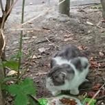 В районе Эльмаша скитается котик, Екатеринбург