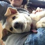 Помогите найти щенка, Екатеринбург