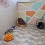 Гостиница для  собак и кошек, Екатеринбург