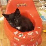 Отдаю котят в добрые руки, Екатеринбург