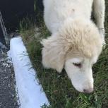Потеряшки. Найден щенок, Екатеринбург