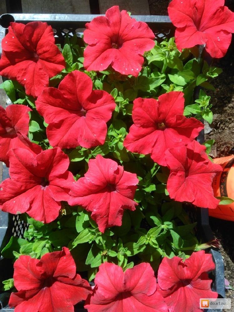Букет, рассада цветов купить в астане