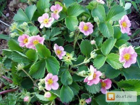 новые фото букетов из цветов