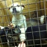 Щенки и взрослые собаки очень ждут своих новых хозяев, Екатеринбург