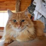 Потерялся рыжий кот в селе Слобода, под Первоуральском, Екатеринбург