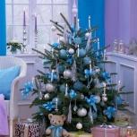 Новогодние голубые живые ели, Екатеринбург